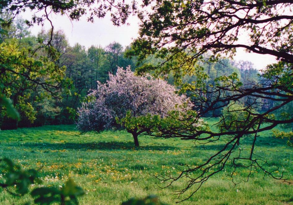 Von alten Obstbäumen zur Apfelscheune