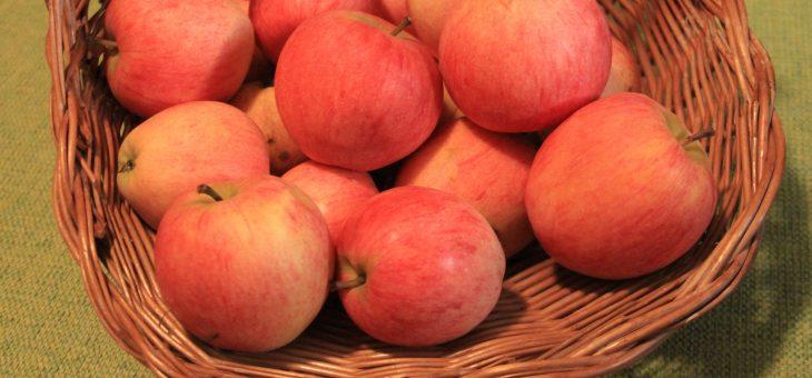 Online-Versand von Äpfeln in alten Sorten beginnt