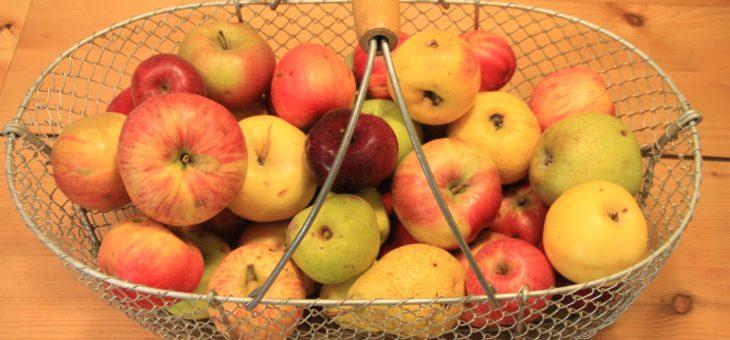 Allee der alten Apfelbäume für die Oberlausitz