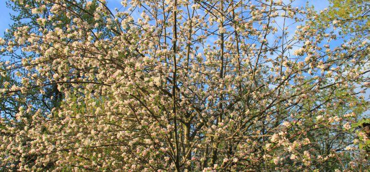 Komm lieber Mai und mache die Bäume wieder grün…