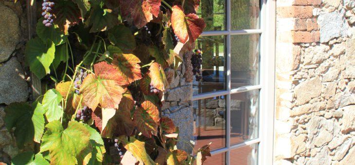 Frischer Birnensaft im Hofladen der Apfelscheune