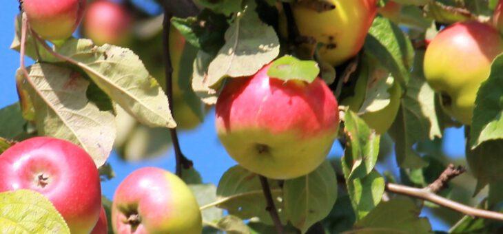 """Video von """"Gunilla reist"""" über die Apfelscheune Cannewitz Teil 1"""